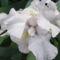 Tavaszi virágok 2012 040