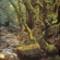 torzfák az  erdőben