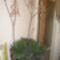 Juniusi virágok 005