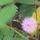 Cejlon - növényvilága
