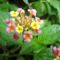 Cejlon növényvilága 10
