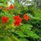 Cejlon növényvilága 2
