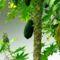 Cejlon növényvilága 5