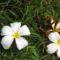 Cejlon növényvilága 7