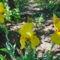 Nyílnak az Iriszeim , nőszirom 15