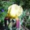 Nyílnak az Iriszeim , nőszirom 16