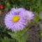 Májusi virágaim 1