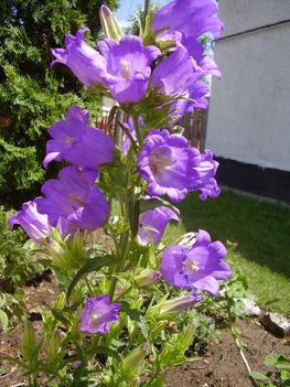 Májusi virágaim 2