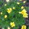 Tavaszi hérics,