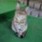 macskák 48