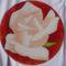 017 rózsa