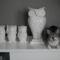 cica a szobrok mellett