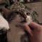 macska király
