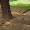 mókuscsalád