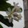 virágok 13