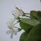virágok 9