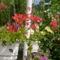 virágai 14