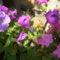 virágai 19