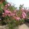 virágai 20