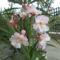 virágai 24