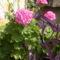 virágai 32