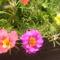 virágai 34