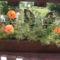 virágai 35