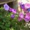 virágai 36