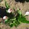 állatok és virágok 4