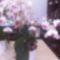 Re-exposure of Rotation of süteményem és a virágaim 009