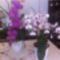 Rotation of süteményem és a virágaim 007