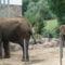 Elefántok ...