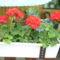 Virágok 20