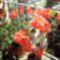 Márti virágai 3