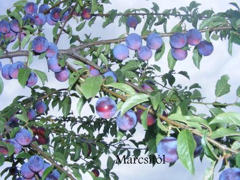 Szilva cseresznye