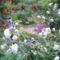 kertünk 1