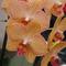 Színes orchidea