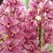 Színes orchideák
