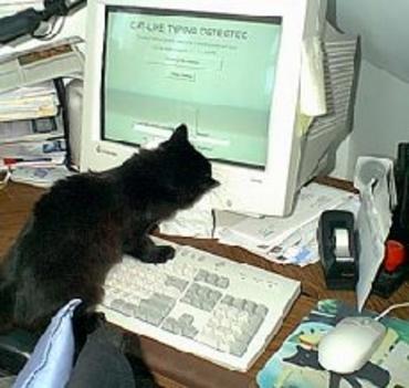 Internetezik a cicus