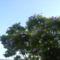 Oszi viradzas,levelekkel