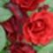 vörös-rózsák