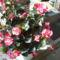 Másolat - Másolat - Másolat - PIC_1068