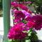 Másolat - PIC_0938