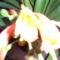 Másolat - PIC_1109
