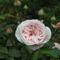 virágok 10