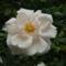 virágok 12