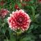 virágok 21