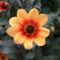virágok 22