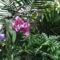 virágok 25