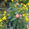 virágok 26